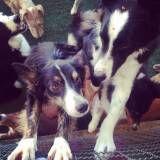 Hospedagens para cães na Vila Mariana