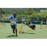Hospedar cães no Jardim Paulistano