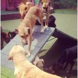 Hospedar cães no Morumbi