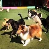 Hospedar cão em Cajamar