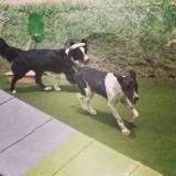 Hospedar dogs no Sacomã