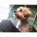 Hospedar meu cachorro em Embu das Artes