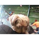 Hospedar meu cão no Alto da Lapa