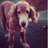 Hospedar meu dog no Jardim Paulista