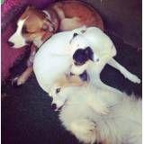 Hotéis com diversão para cachorrinhos na Vila Mariana