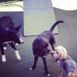 Hotéis com diversão para cachorro no Ipiranga