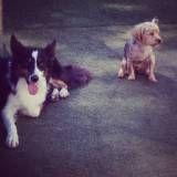 Hotéis com diversão para cachorros em Itapecerica da Serra