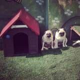 Hotéis de cachorro no Rio Pequeno