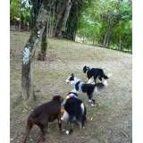 Hotéis de cães na Cidade Dutra