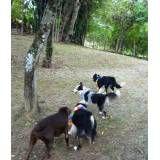 Hotéis de cães no Ipiranga