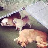 Hotéis divertidos para cão no Ipiranga