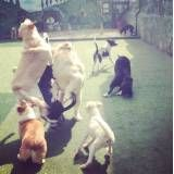 Hotéis dogs na Cidade Jardim