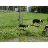 Hotéis para cães na Lapa