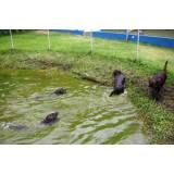 Hotéis para cão no Butantã