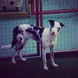 Hotéis para dog na Cidade Ademar