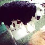 Hotéis para o meu dog no Morumbi