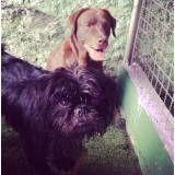Hoteizinhos de cachorro  no Jardim Bonfiglioli