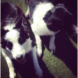 Hoteizinhos de cão na Cidade Jardim