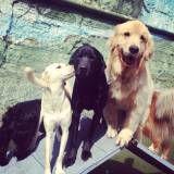 Hoteizinhos para cachorros  na Cidade Dutra