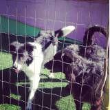 Hoteizinhos para cães  em Barueri
