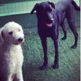 Hoteizinhos para cão  no Socorro