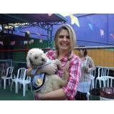 Hotel bom para cachorro de pequeno porte em São Lourenço da Serra