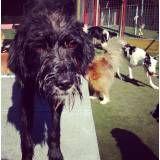 Hotel cães na Cidade Ademar