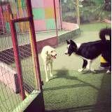 Hotel cão  em Cajamar