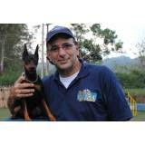 Hotel cão em Sumaré