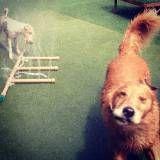 Hotel com brincadeira para cachorro em Cotia