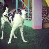 Hotel com brincadeira para cão no Jardim Europa