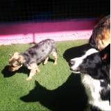 Hotel com brincadeiras para cães em Itapevi