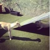 Hotel com brincadeiras para cão na Vila Sônia