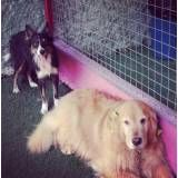 Hotel com brincadeiras para cão no Jabaquara