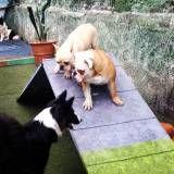 Hotel com diversão para cães no Jardim Paulistano