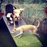 Hotel com diversão para cãezinhos no Morumbi