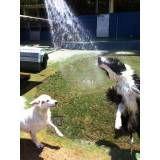 Hotel de cachorro na Vila Andrade