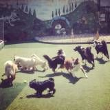 Hotel de cachorros no Jardins