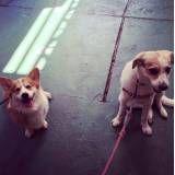 Hotel de cães na Vila Sônia