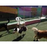 Hotel de cão  em Moema