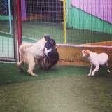 Hotel divertido para cães em Itapevi