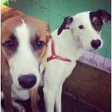 Hotel especial de cachorros no Socorro