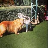 Hotel especial para cachorrinho em Cajamar