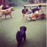 Hotel média estadia para cachorro no Campo Limpo