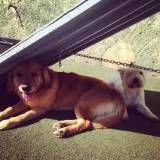 Hotel ou creche de cães em Cotia