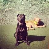 Hotel ou creche para cão em Carapicuíba