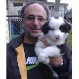 Hotel para cachorrinho em Interlagos