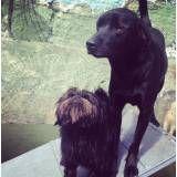 Hotelzinho de cachorro em Santo Amaro