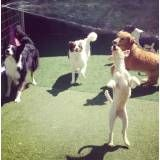 Hotelzinho de cães  na Cidade Jardim