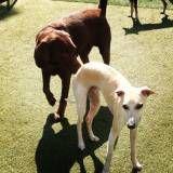 Hotelzinho de cães no Jockey Club